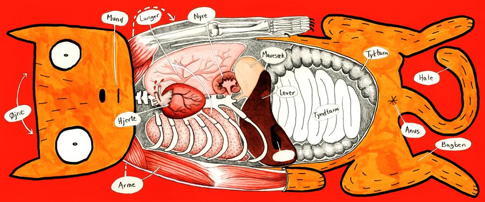 9-anatomi